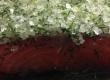 Lachs vor dem Trockensalzen - Räucherlachs selber machen